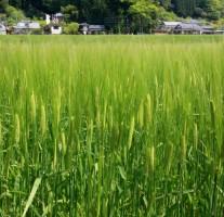 人気のチャンポン店「長崎亭」が那珂川町にオープン予定です。