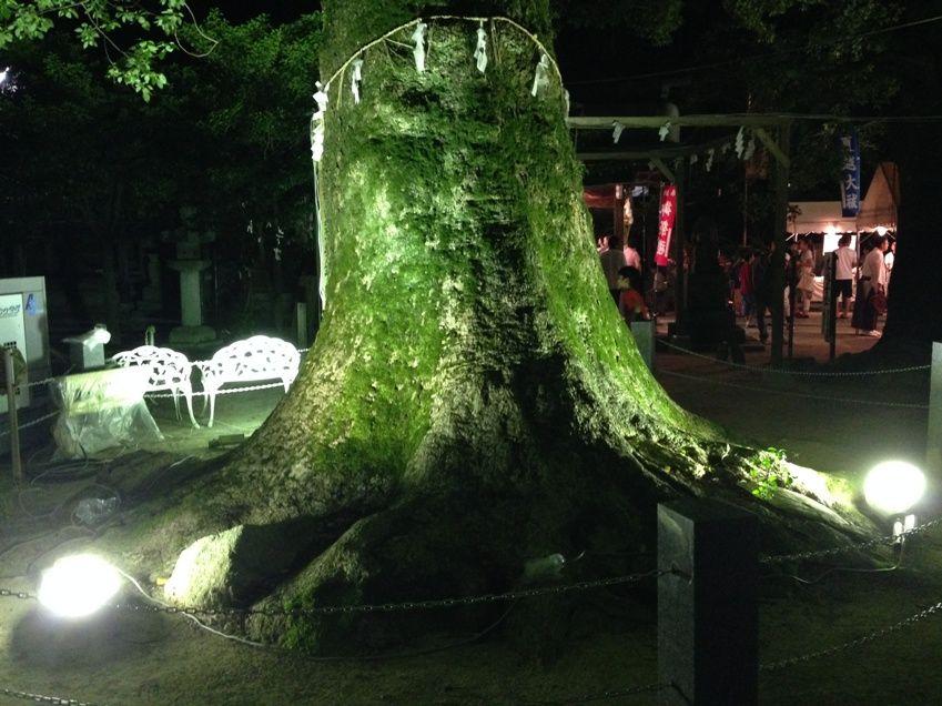 現人神社のライトアップされた大木