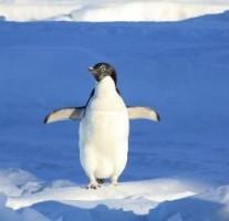 ペンギンアップデート3.0により、連日検索順位の大変動が続いています。
