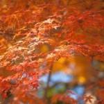 現人神社では10月19日(日)におくんち(秋祭)が行われます。流鏑馬や奉納相撲など見物客で賑わいます。