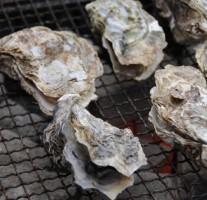 【2014】JR博多南駅前ビルで牡蠣焼きが楽しめます。