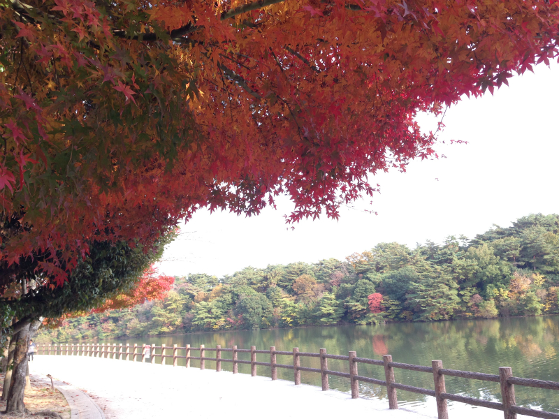 白水大池公園の紅葉