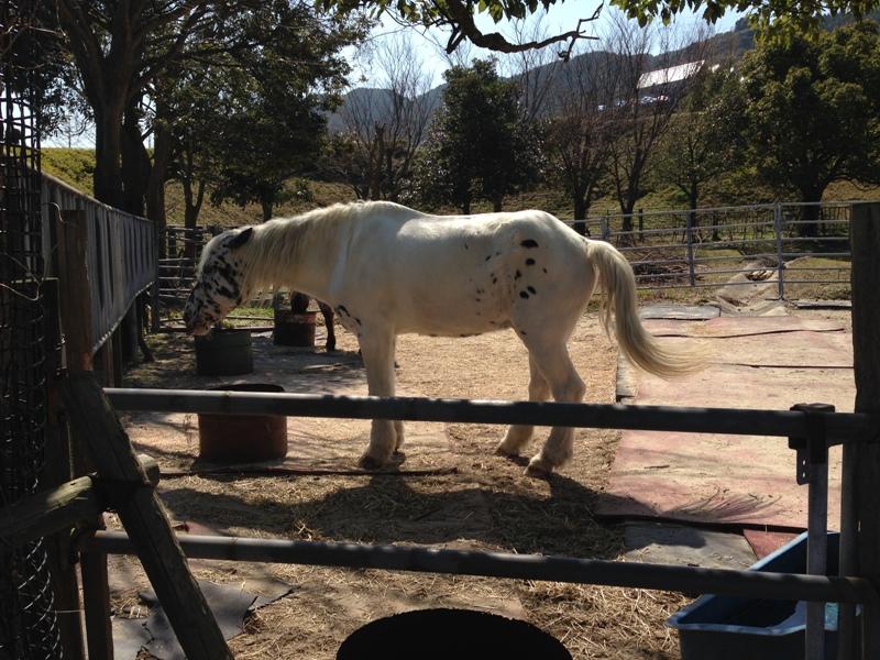 油山牧場の馬
