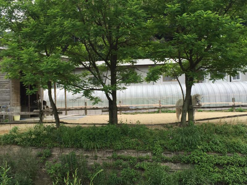 上原田公園隣の白馬