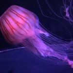 『マリンワールド海の中道』の夜の水族館で息子は興奮!