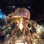 御船町恐竜博物館に行ってきました。迫力満天でどれだけいても飽きません。