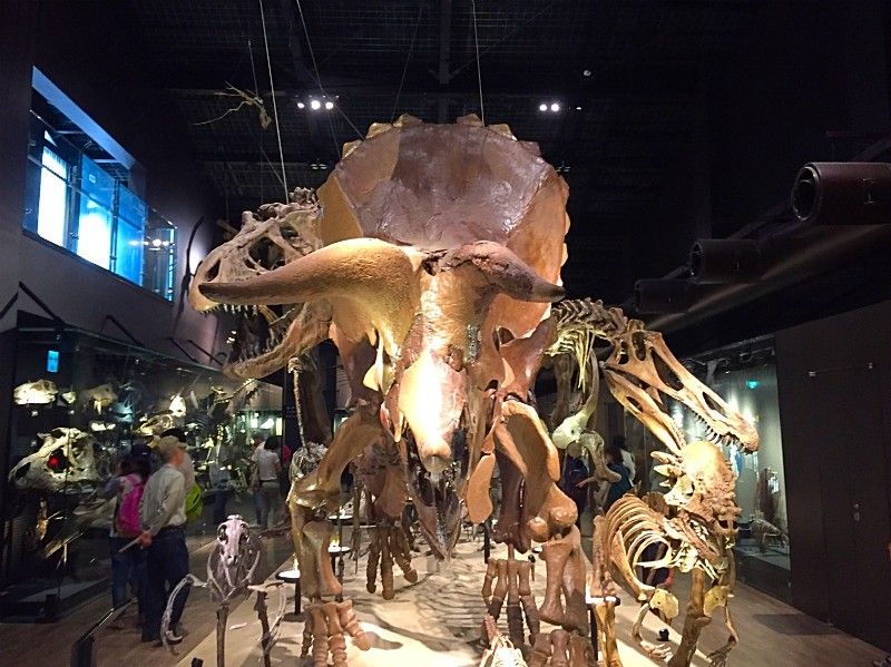 恐竜の全身頭骨
