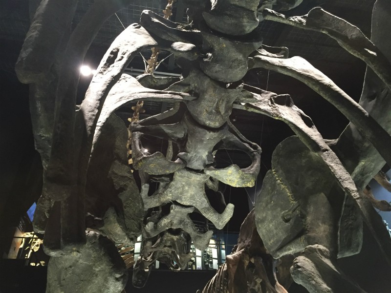 恐竜の背骨