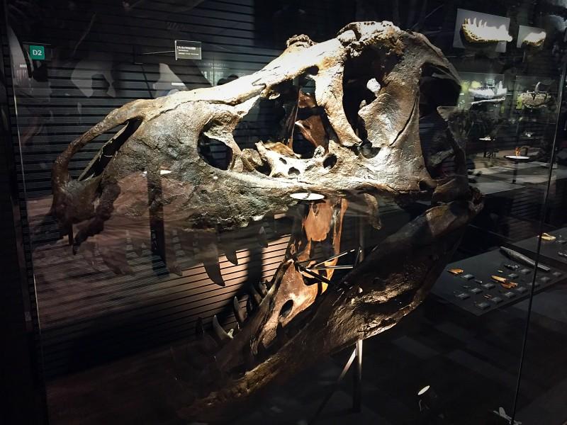 ティラノサウルスの頭骨