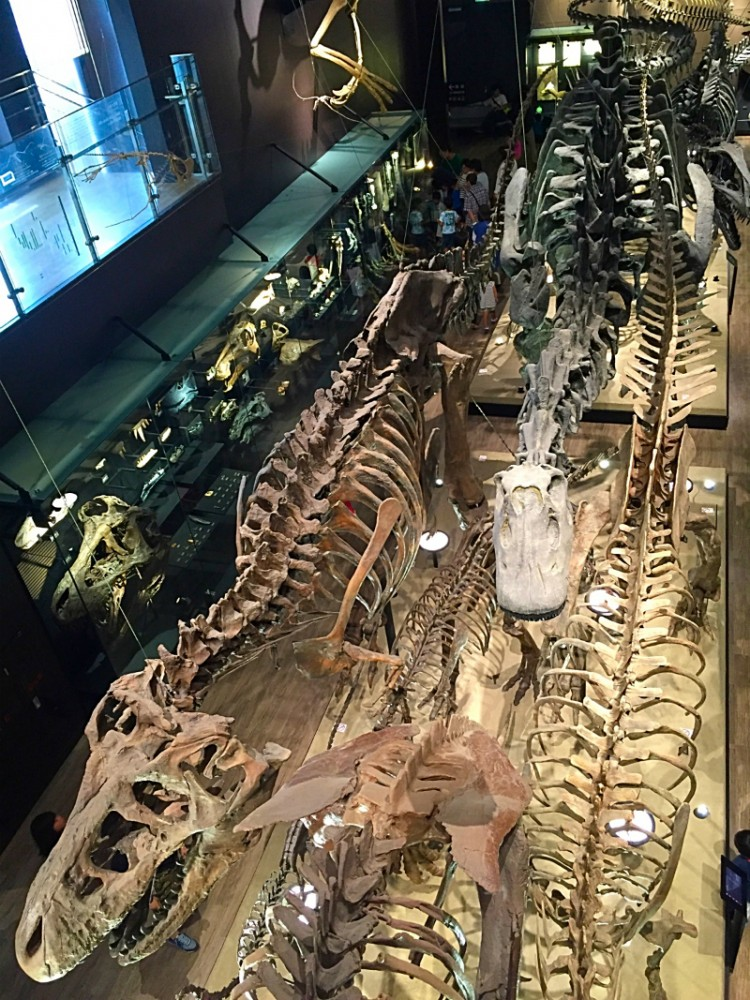 御船町恐竜博物館吹き抜け