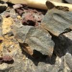 「みふね化石ひろば」で化石採集にチャレンジしてきました。