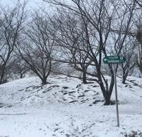 南国育ちなので、この歳になっても雪が積もるとワクワクしてしまう。