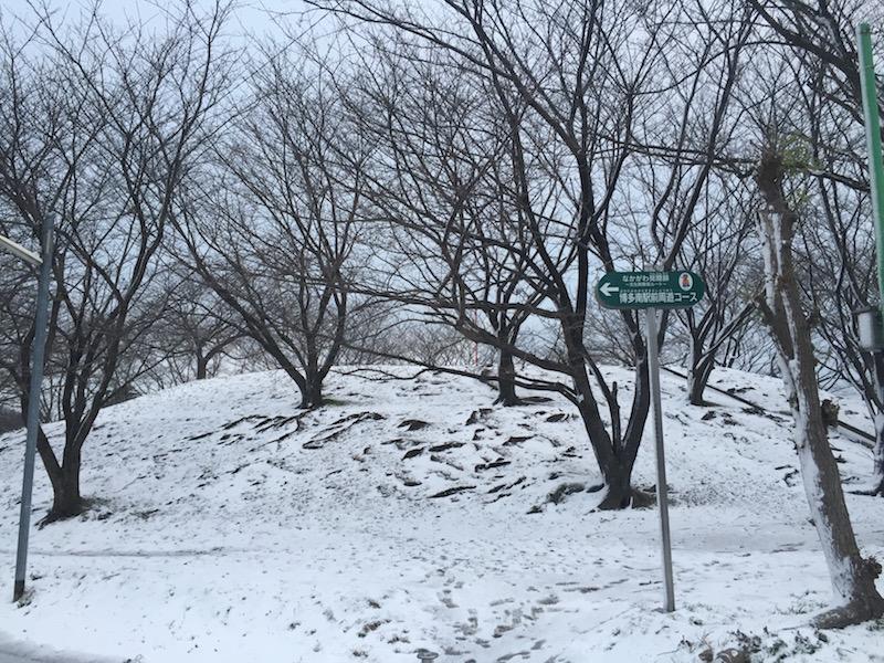 福岡に雪が降った