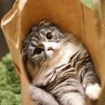 まさに猫の手を借りたい状況です。