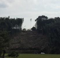 安徳台の一部の木々が伐採されて台地の上が見えてるじゃないですか!
