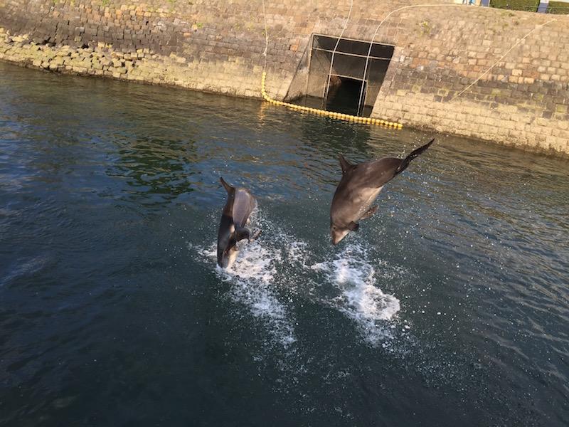 イルカの水路展示