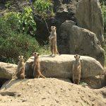 生態展示の長崎バイオパークは面白いけど、真夏の暑さにはご注意を。