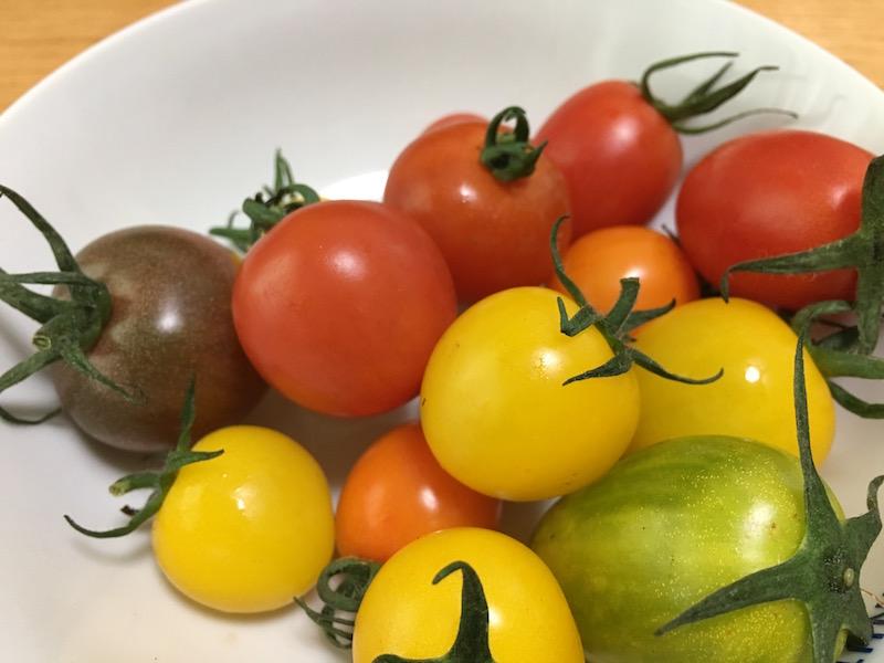 西海のミニトマト